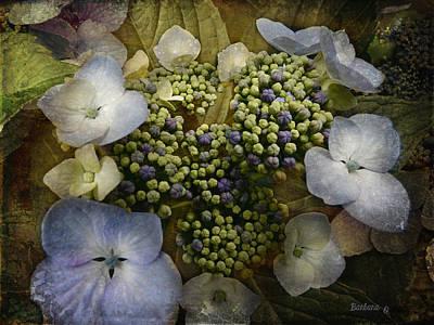 Blue Hydrangea Print by Barbara Orenya