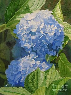 Blooming Painting - Blue Hydrangea Blossoms by Sharon Freeman