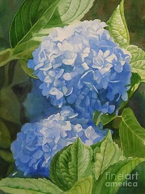Blue Hydrangea Blossoms Print by Sharon Freeman