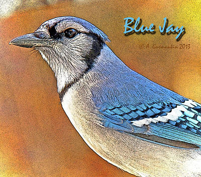 Print featuring the photograph Blue Jay by A Gurmankin