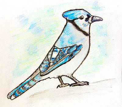 Bluejay Drawing - Blue Jay by Pati Photography