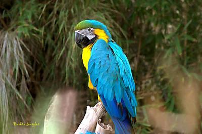 Blue Macaw Print by Barbara Snyder