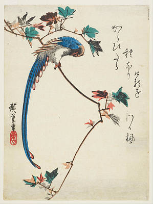 Magpies Drawing - Blue Magpie On Maple Branch by Utagawa Hiroshige