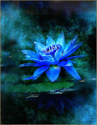 Water Lilly Photograph - Blue Mist by Bill Voizin
