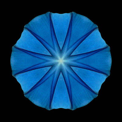Blue Morning Glory Flower Mandala Print by David J Bookbinder