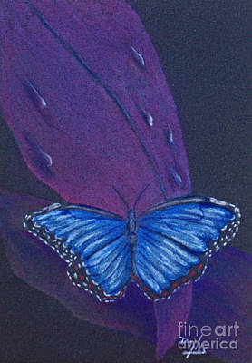 Antennae Drawing - Blue Morpho Butterfly by Terri Mills