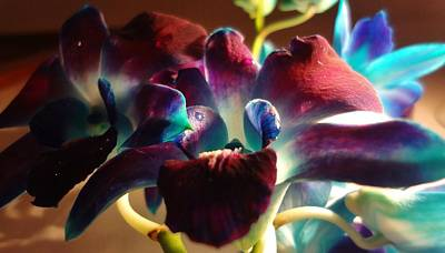Flower Photograph - Blue Orchid 4 by Sarah Pemberton