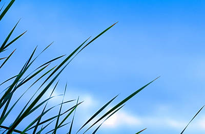 Reeds Photograph - Blue Reed by Joseph Smith