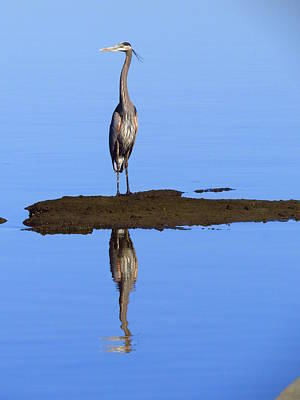Blue Reflections Print by Phyllis Beiser