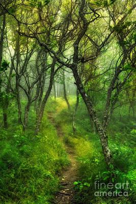 Blue Ridge - Hiking Trail Through Trees In Fog I Print by Dan Carmichael