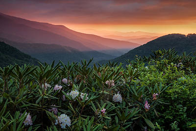 Blue Ridge Morn With Rose Bay Rhododendron  Print by Rob Travis