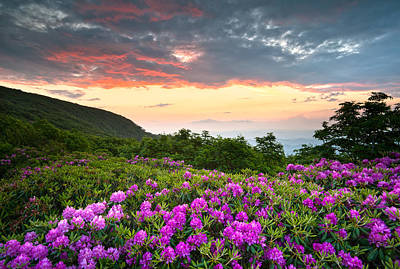 Blue Ridge Parkway Sunset - Craggy Gardens Rhododendron Bloom Print by Dave Allen