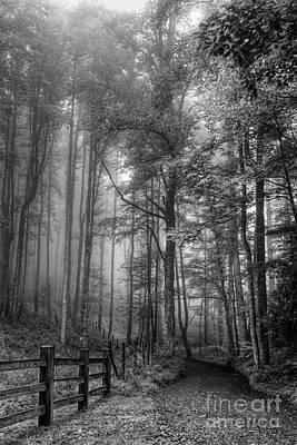 Blue Ridge - Trees In Fog Country Road Print by Dan Carmichael