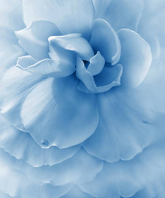 Blue Begonia Photograph - Blue Ruffled Begonia Flower by Jennie Marie Schell