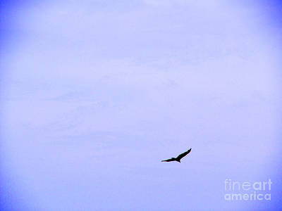 Blue Solo Flight Print by Tina M Wenger