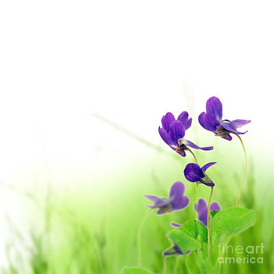 Blue Spring Flowers Print by Boon Mee
