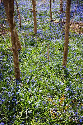 Abundance Photograph - Blue Spring Flowers In Forest by Elena Elisseeva
