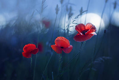 Poppy Photograph - Blue Summer by Magda  Bognar
