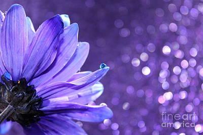 Violet Photograph - Blue Tear by Krissy Katsimbras