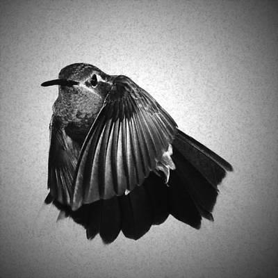 Hummingbird Photograph - Blue-throated Hummingbird As A Sketch by Gregory Scott