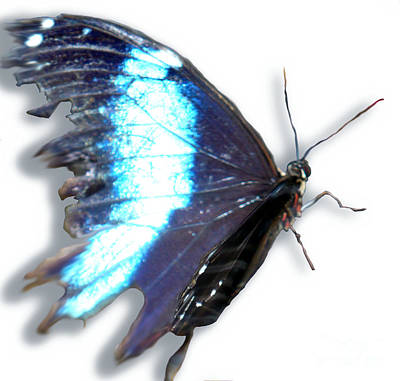 Blue Winged Thing Print by Kryztina Spence