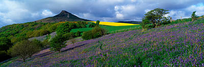 Hilltop Scenes Photograph - Bluebell Flowers In A Field, Cleveland by Panoramic Images