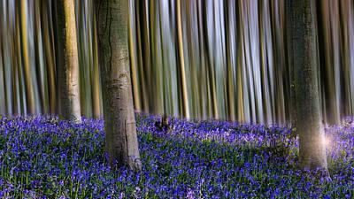 Bluebell Woodland Art Print by Ian Hufton