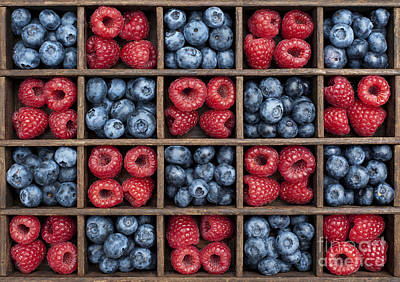 Raspberry Photograph - Blueberries And Raspberries  by Tim Gainey