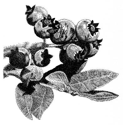Blueberry Drawing - Blueberry by Rob Christensen