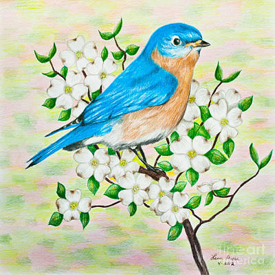Bluebird Drawing - Bluebird And Dogwood by Lena Auxier