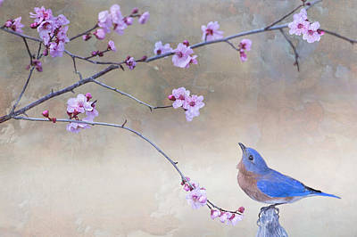 Bluebird And Plum Blossoms Print by Bonnie Barry