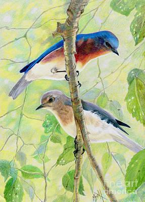 Bluebird Drawing - Bluebird Pair by Marilyn Smith