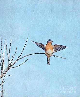 Art For Home Photograph - Bluebird Wings - Minimalism by Kerri Farley