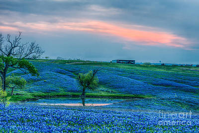 Sunset Photograph - Bluebonnet Farm -texas Bluebonnets-sunset by Tod and Cynthia Grubbs