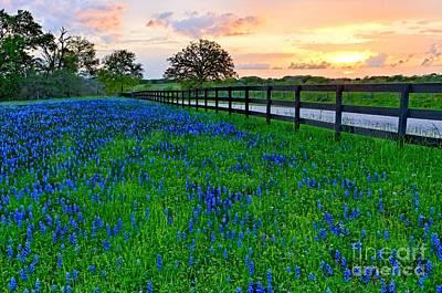 Bluebonnet Fields Forever Brenham Texas Print by Silvio Ligutti