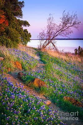 Grapevines Photograph - Bluebonnet Trail by Inge Johnsson