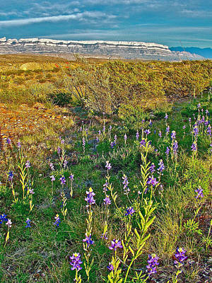 Del Rio Digital Art - Bluebonnets And Creosote Bushes In Big Bend National Park-texas by Ruth Hager