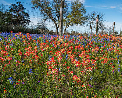 Flowers Photograph - Texas Bluebonnets And Wildflowers by Tod and Cynthia Grubbs