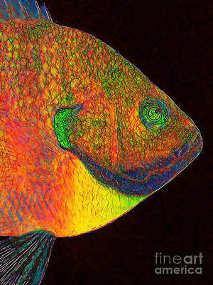 Bluegill Fish Print by Wingsdomain Art and Photography