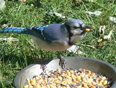Bluejay Mixed Media - Bluejay Feeding by Connie Dye