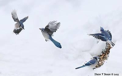 Bluejay Digital Art - Blue Jays Forming A Line by Diane V Bouse