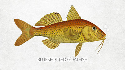 Angling Digital Art - Bluespotted Goatfish by Aged Pixel