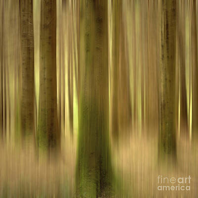 Blurred Trunks In A Forest Print by Bernard Jaubert