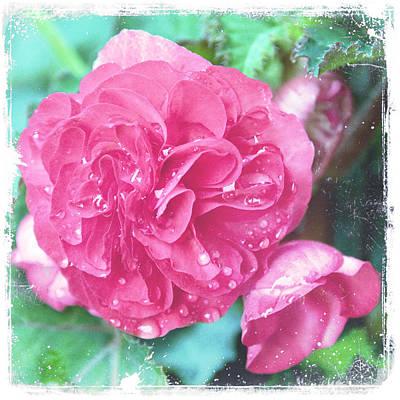 Begonia Garden Photograph - Blush Of Spring II by Tammy Wetzel