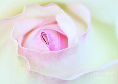 Suggestive Photograph - Blushed Rose by Sabrina L Ryan