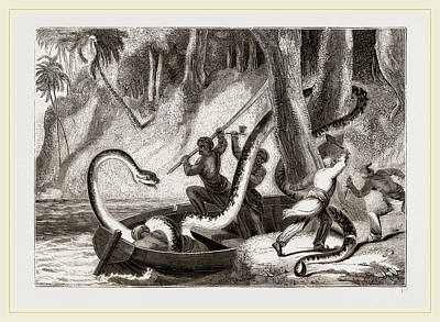 Boa Constrictor Drawing - Boa Attacking A Sleeping Lasear by Litz Collection