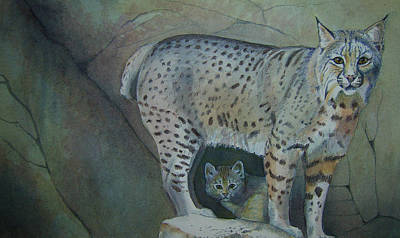 Bobcat And Baby Print by Carmen Durden