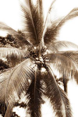 Toro Photograph - Bocas Palm by John Rizzuto