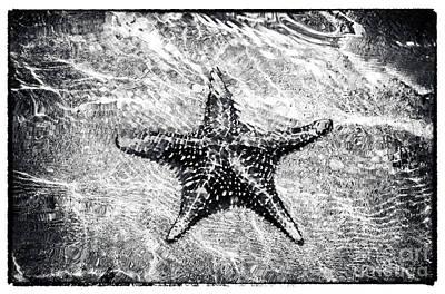 Toro Photograph - Bocas Starfish  by John Rizzuto
