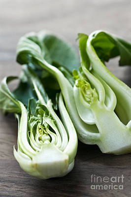 Cabbage Photograph - Bok Choy by Elena Elisseeva